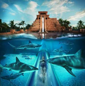Aquaventure Dubai squali